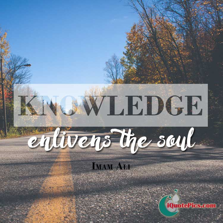 Picture with quote of Knowledge enlivens the soul.